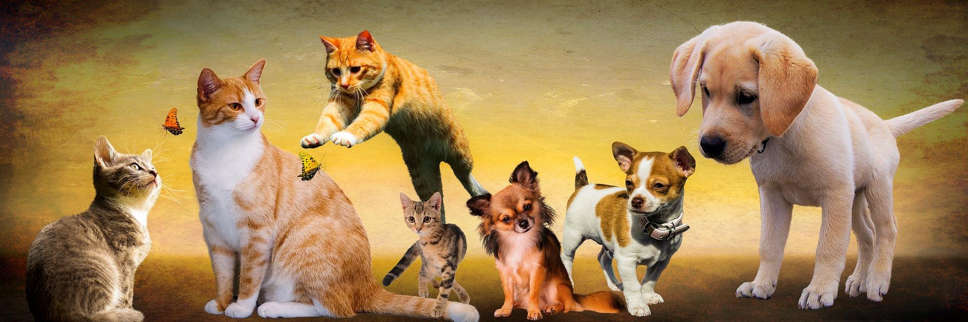 Dipl. Trainerin für Hunde und Katzen